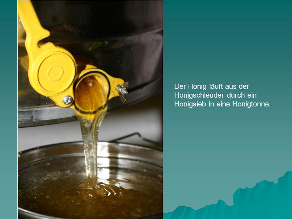 Der Honig läuft aus der Honigschleuder durch ein Honigsieb in eine Honigtonne.