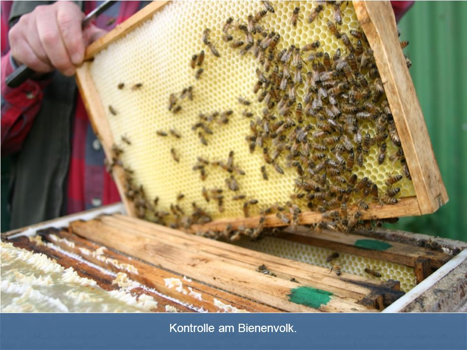 Kontrolle am Bienenvolk.