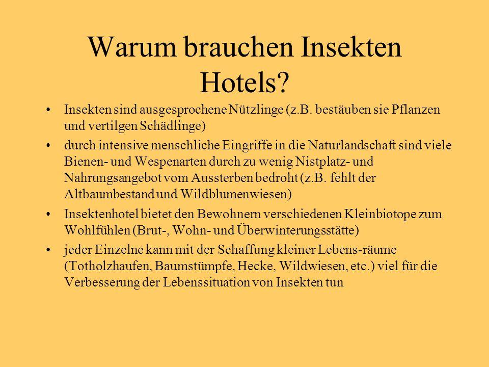 Warum brauchen Insekten Hotels