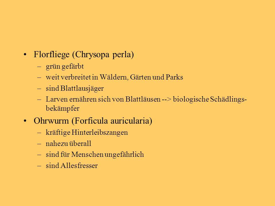 Florfliege (Chrysopa perla)