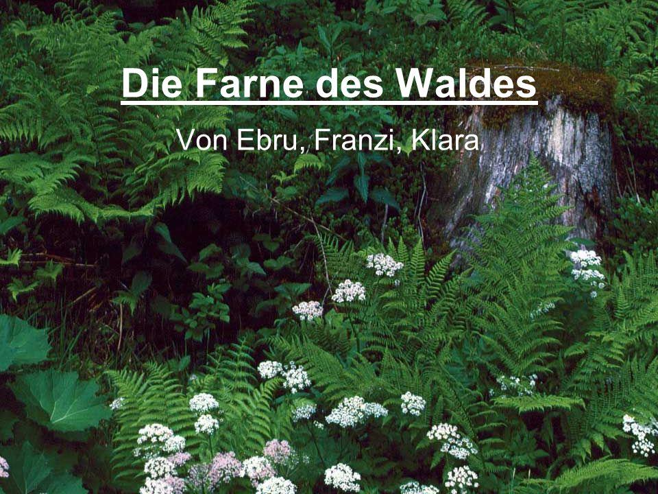 Die Farne des Waldes Von Ebru, Franzi, Klara