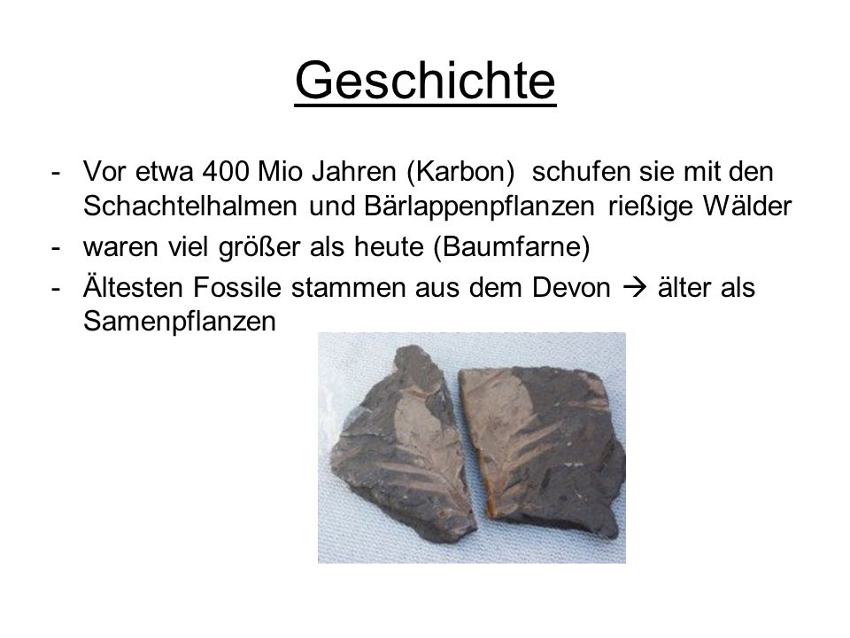 Geschichte Vor etwa 400 Mio Jahren (Karbon) schufen sie mit den Schachtelhalmen und Bärlappenpflanzen rießige Wälder.