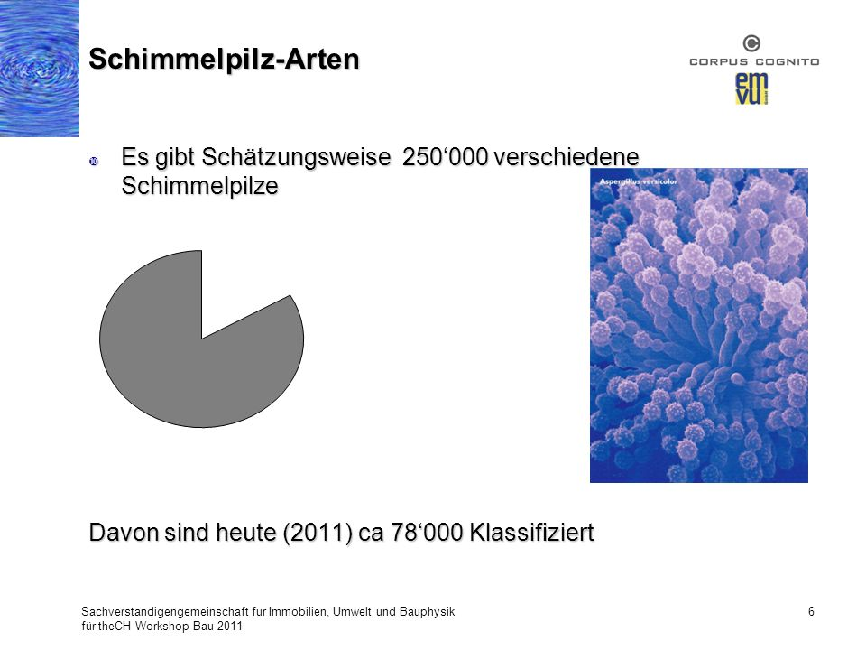 Schimmelpilz-Arten Es gibt Schätzungsweise 250'000 verschiedene Schimmelpilze. Davon sind heute (2011) ca 78'000 Klassifiziert.