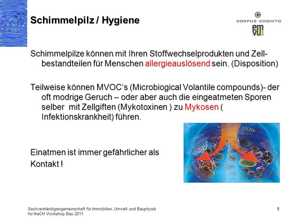 Schimmelpilz / Hygiene