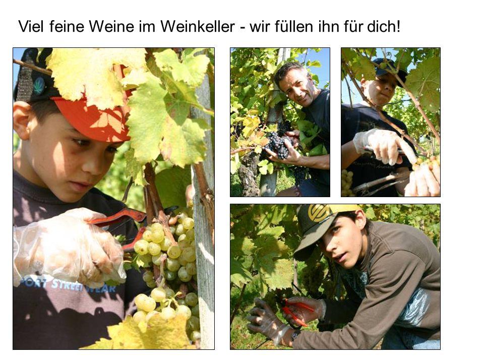 Viel feine Weine im Weinkeller - wir füllen ihn für dich!