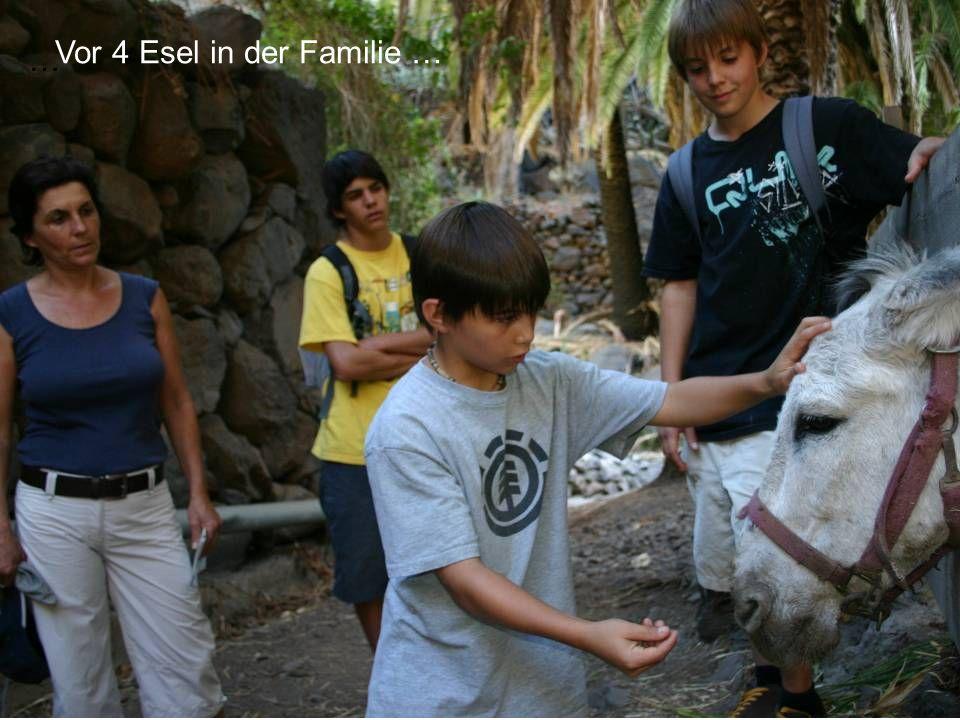 Vor 4 Esel in der Familie …