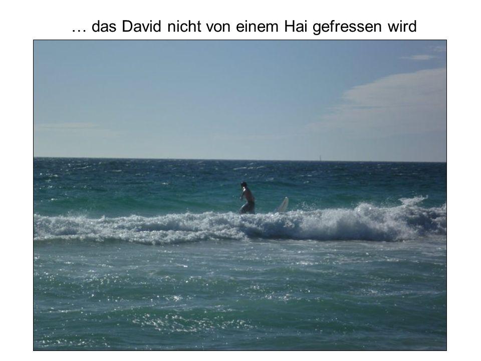 … das David nicht von einem Hai gefressen wird