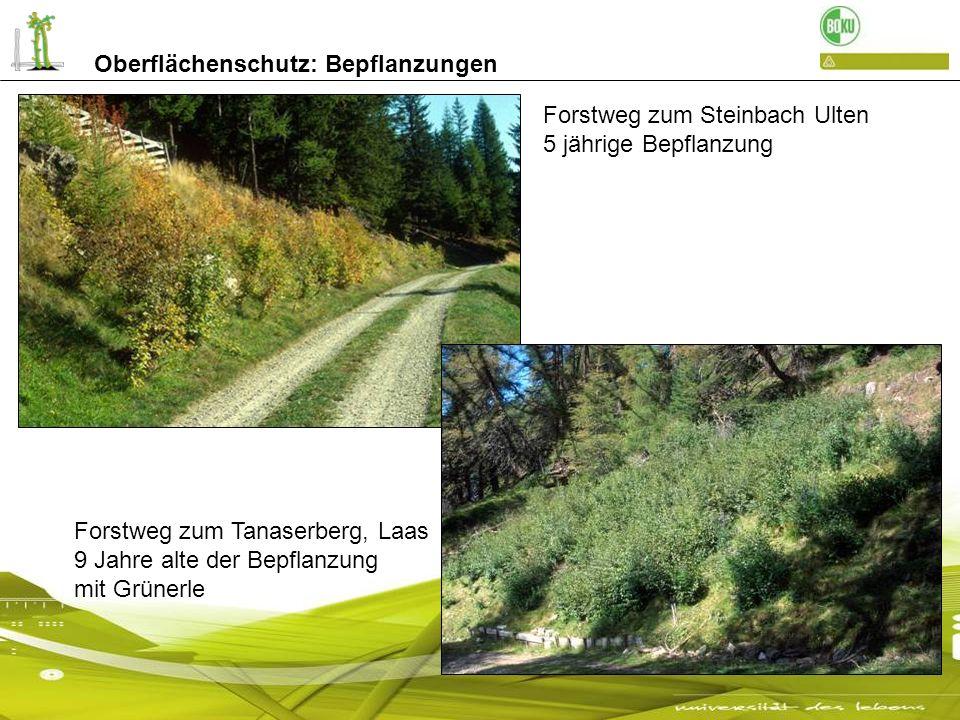 Oberflächenschutz: Bepflanzungen