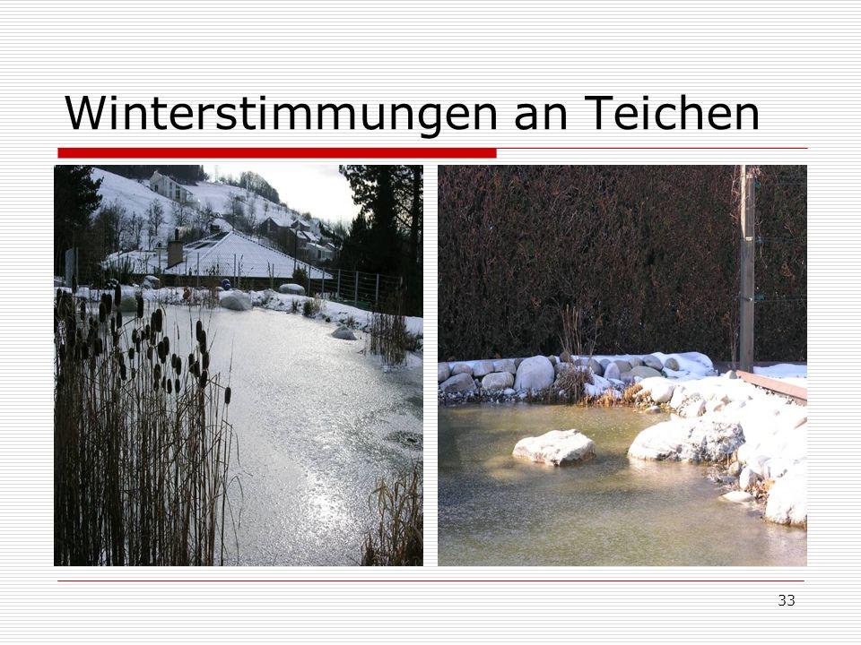 Winterstimmungen an Teichen