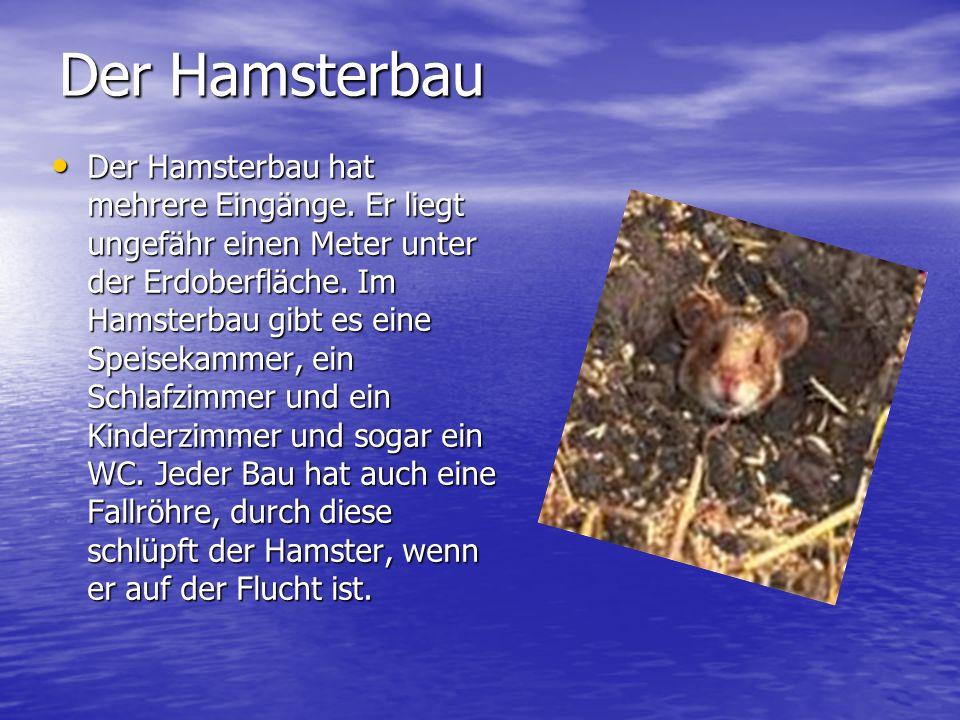Der Hamsterbau