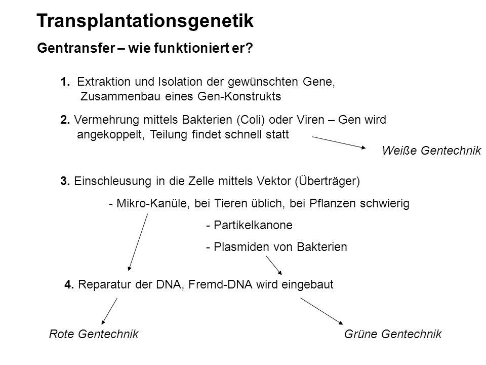 Transplantationsgenetik Gentransfer – wie funktioniert er