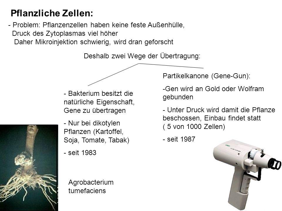 Pflanzliche Zellen: