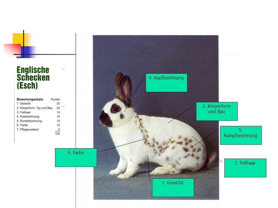 4. Kopfzeichnung 2. Körperform und Bau 5. Rumpfzeichnung 6. Farbe 3. Fellhaar 1. Gewicht