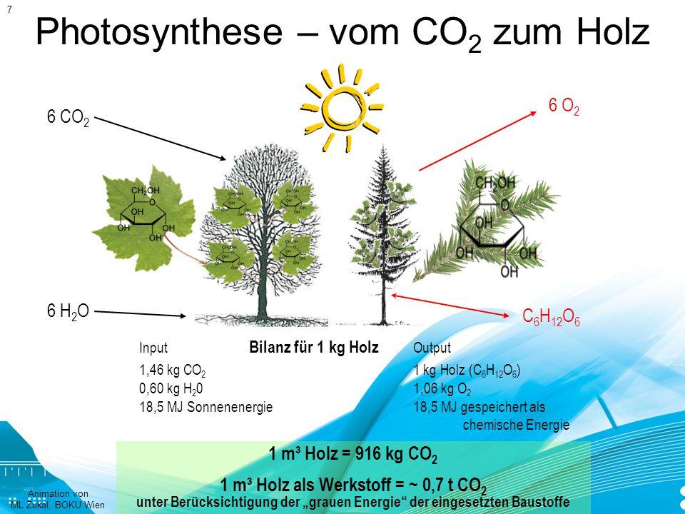 Photosynthese – vom CO2 zum Holz