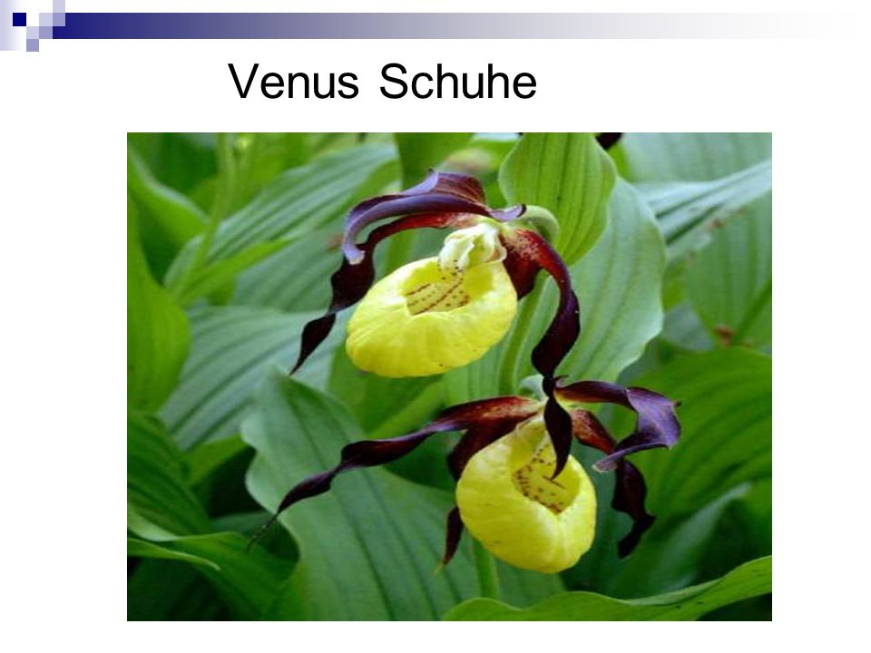 Venus Schuhe