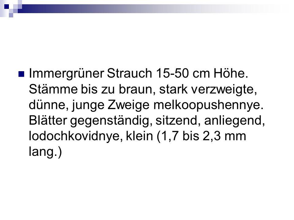 Immergrüner Strauch 15-50 cm Höhe