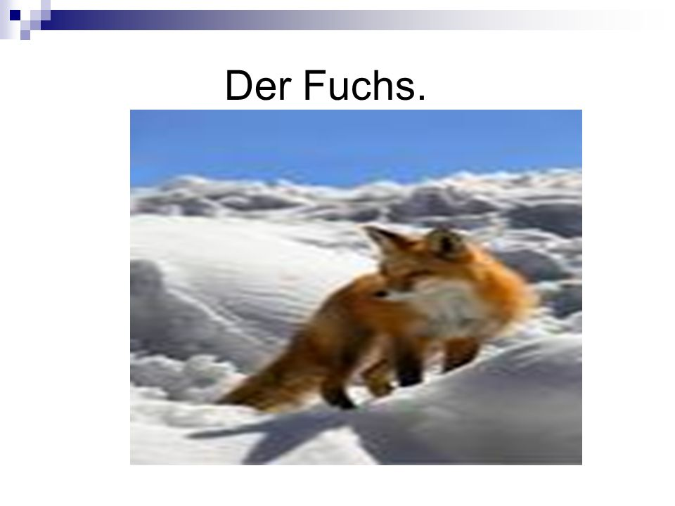 Der Fuchs.