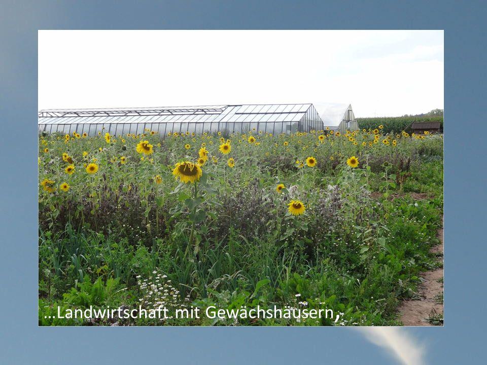 …Landwirtschaft mit Gewächshäusern,