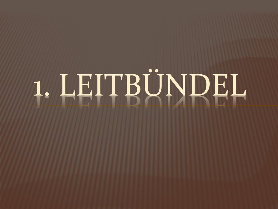 1. Leitbündel