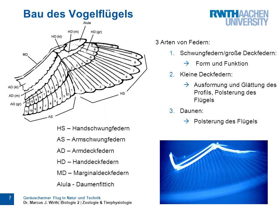 Bau des Vogelflügels 3 Arten von Federn: