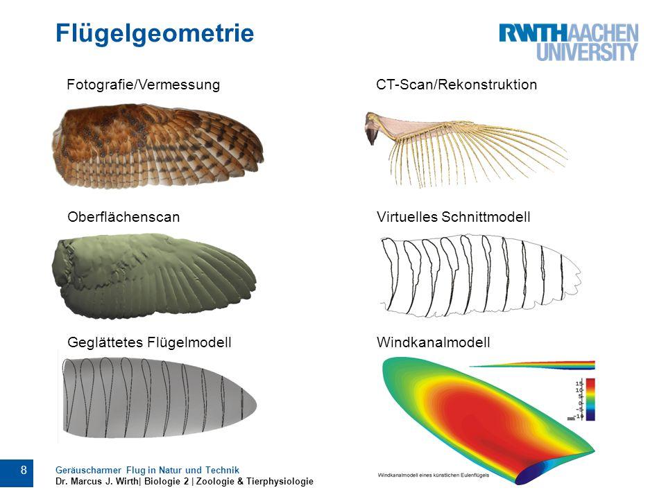 Flügelgeometrie Fotografie/Vermessung CT-Scan/Rekonstruktion