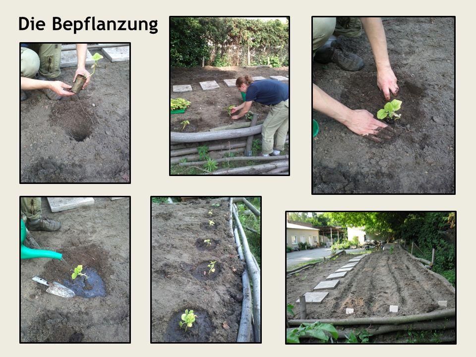 Die Bepflanzung