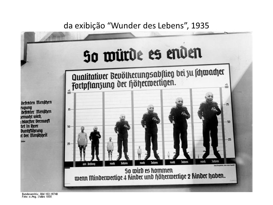 da exibição Wunder des Lebens , 1935