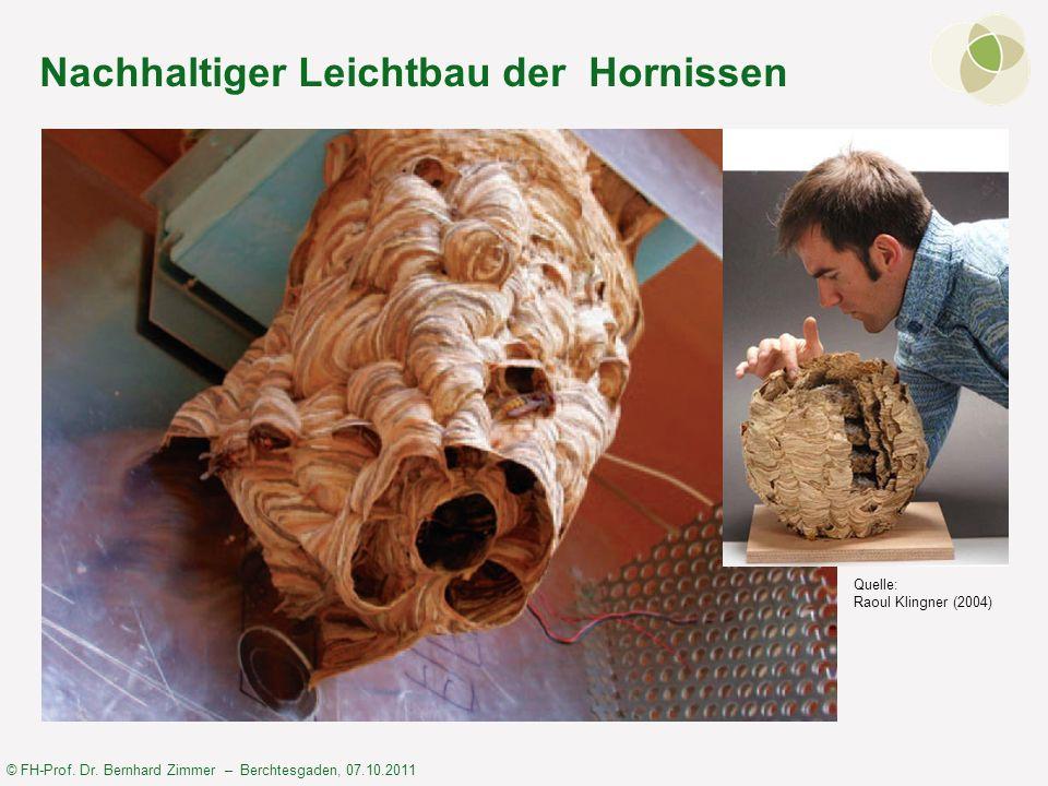 Nachhaltiger Leichtbau der Hornissen