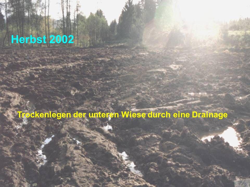Herbst 2002 Trockenlegen der unteren Wiese durch eine Drainage