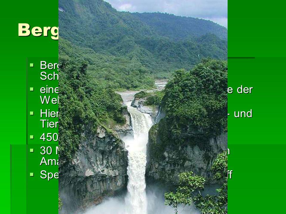 Bergnebelwald Bergnebelwald des Mindo-Nambillo-Schutzgebietes in Ecuador. eines der 5 artenreichsten Waldgebiete der Welt.