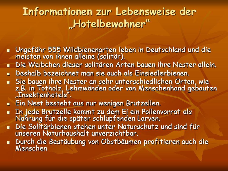 """Informationen zur Lebensweise der """"Hotelbewohner"""