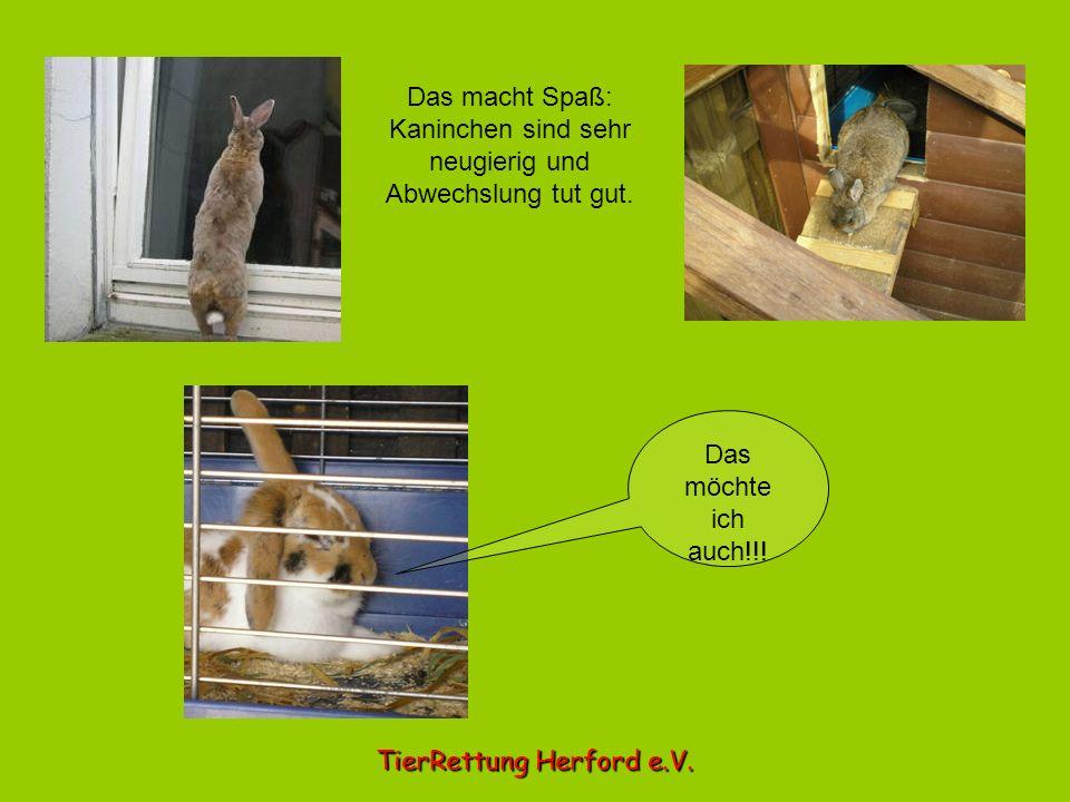 Kaninchen sind sehr neugierig und Abwechslung tut gut.