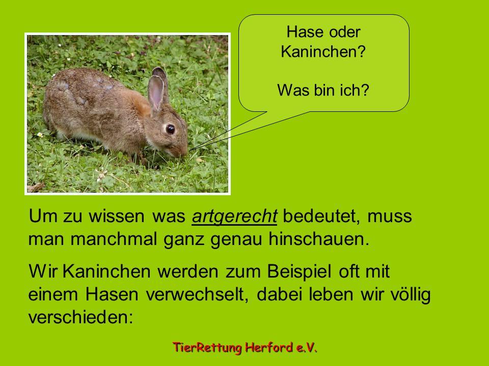 Hase oder Kaninchen Was bin ich Um zu wissen was artgerecht bedeutet, muss man manchmal ganz genau hinschauen.