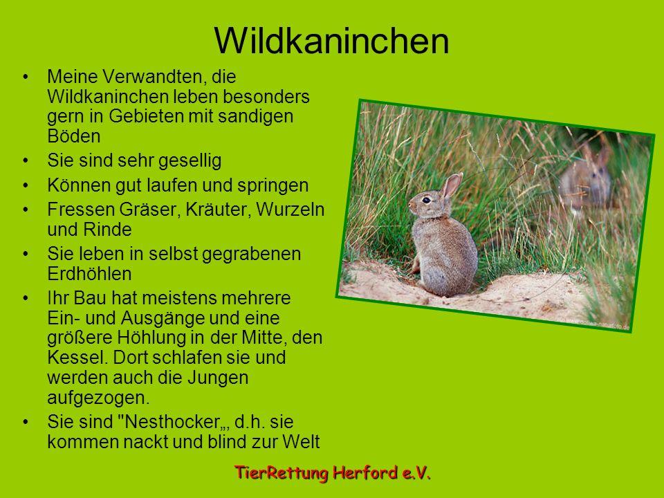 Wildkaninchen Meine Verwandten, die Wildkaninchen leben besonders gern in Gebieten mit sandigen Böden.