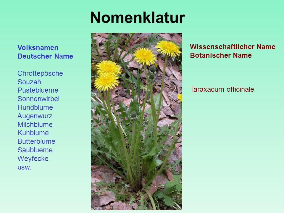 Nomenklatur Volksnamen Wissenschaftlicher Name Botanischer Name
