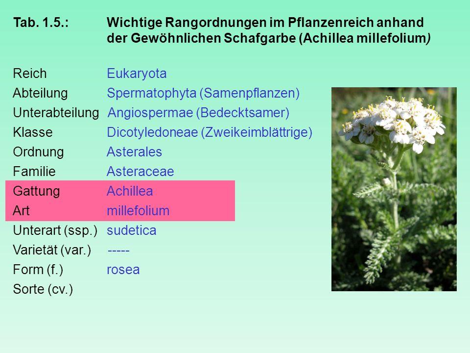 Tab. 1.5.: Wichtige Rangordnungen im Pflanzenreich anhand