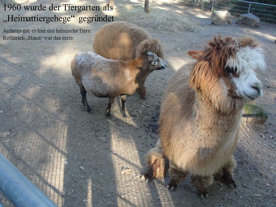 """1960 wurde der Tiergarten als """"Heimattiergehege gegründet"""