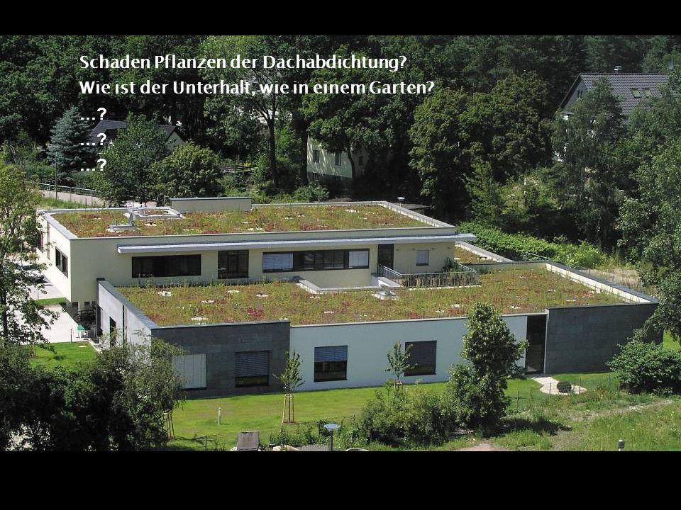 Schaden Pflanzen der Dachabdichtung
