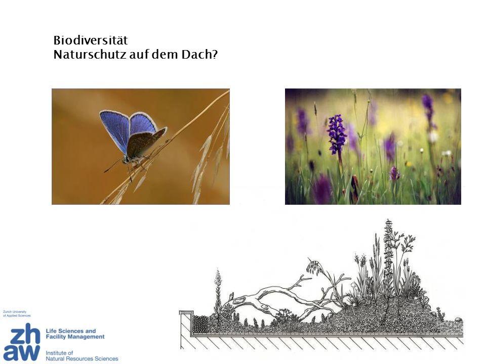 Biodiversität Naturschutz auf dem Dach