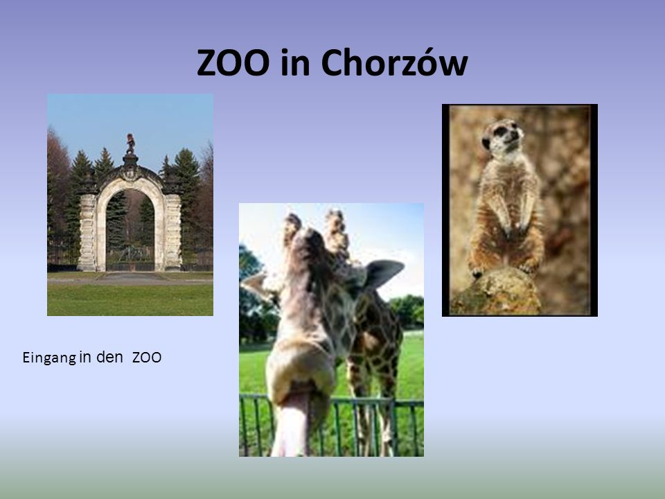 ZOO in Chorzów Eingang in den ZOO