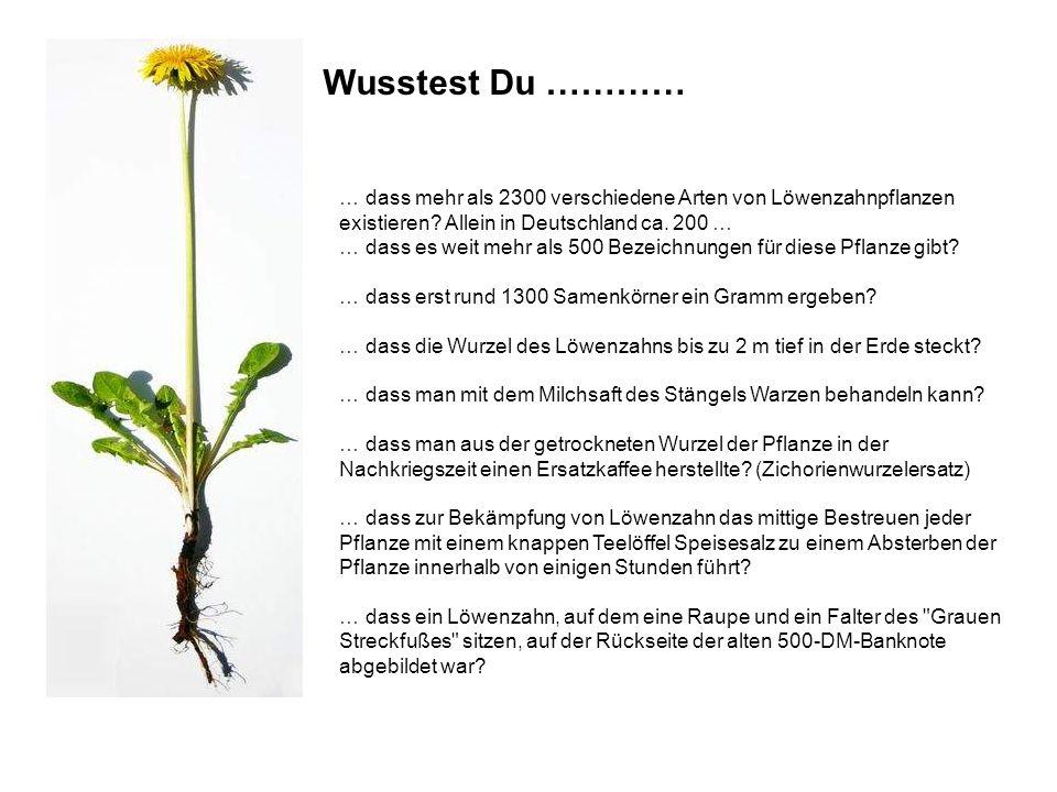 Wusstest Du ………… … dass mehr als 2300 verschiedene Arten von Löwenzahnpflanzen existieren Allein in Deutschland ca. 200 …