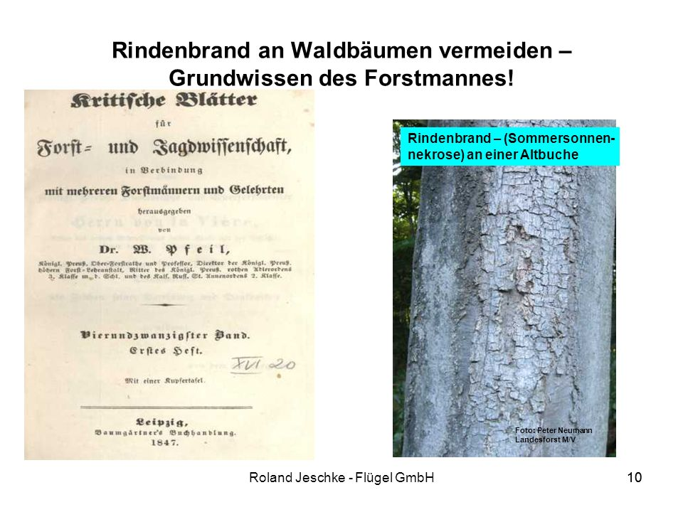 Rindenbrand an Waldbäumen vermeiden – Grundwissen des Forstmannes!