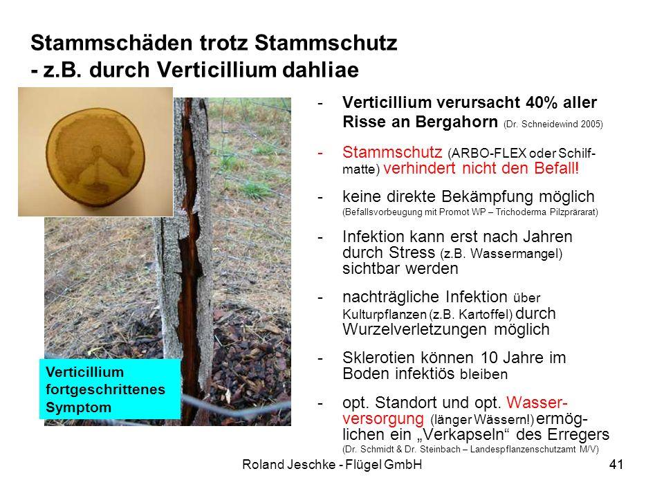Stammschäden trotz Stammschutz - z.B. durch Verticillium dahliae