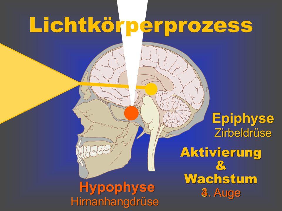l Lichtkörperprozess l Epiphyse Hypophyse Aktivierung & Wachstum