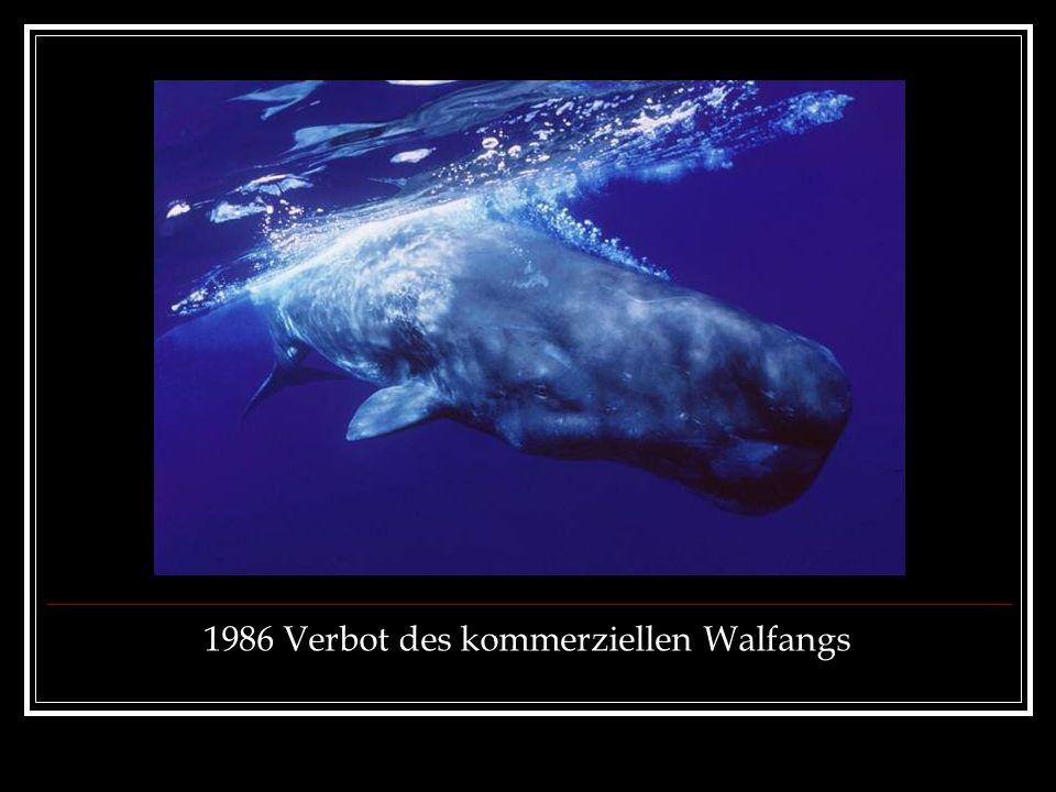 1986 Verbot des kommerziellen Walfangs