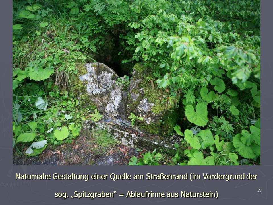 Naturnahe Gestaltung einer Quelle am Straßenrand (im Vordergrund der sog.