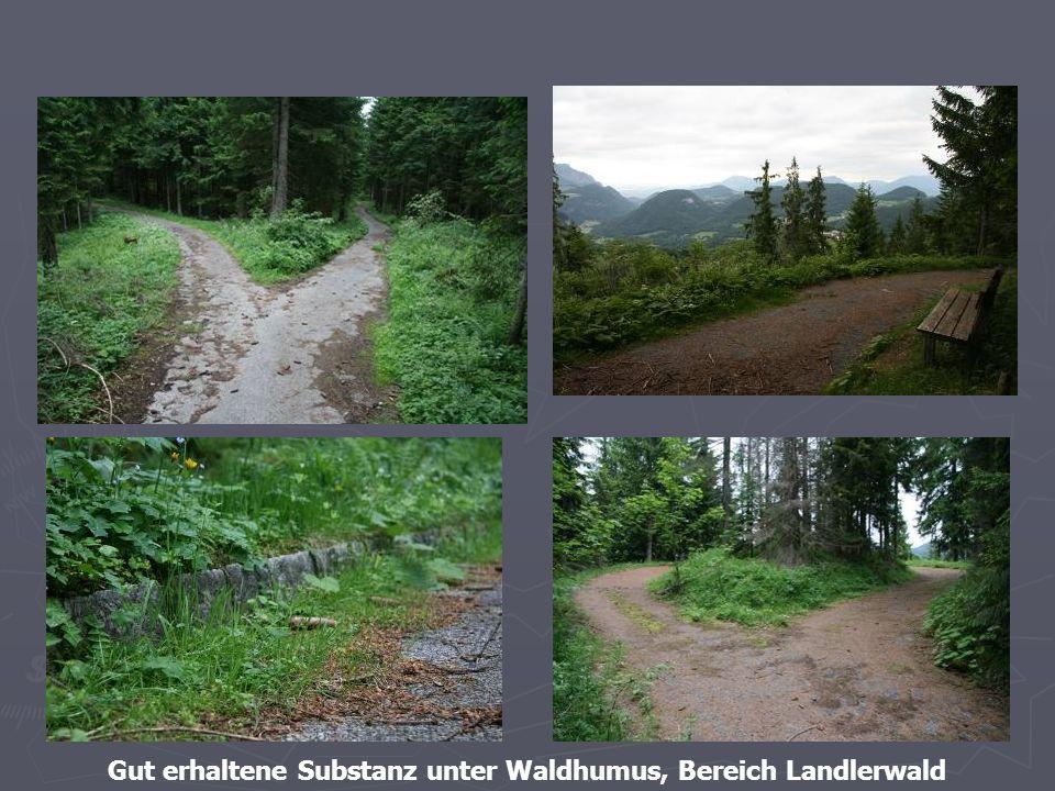 Gut erhaltene Substanz unter Waldhumus, Bereich Landlerwald