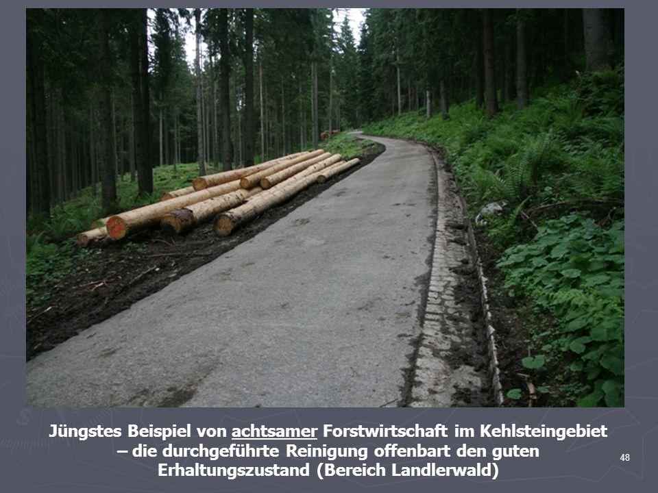 Jüngstes Beispiel von achtsamer Forstwirtschaft im Kehlsteingebiet – die durchgeführte Reinigung offenbart den guten Erhaltungszustand (Bereich Landlerwald)