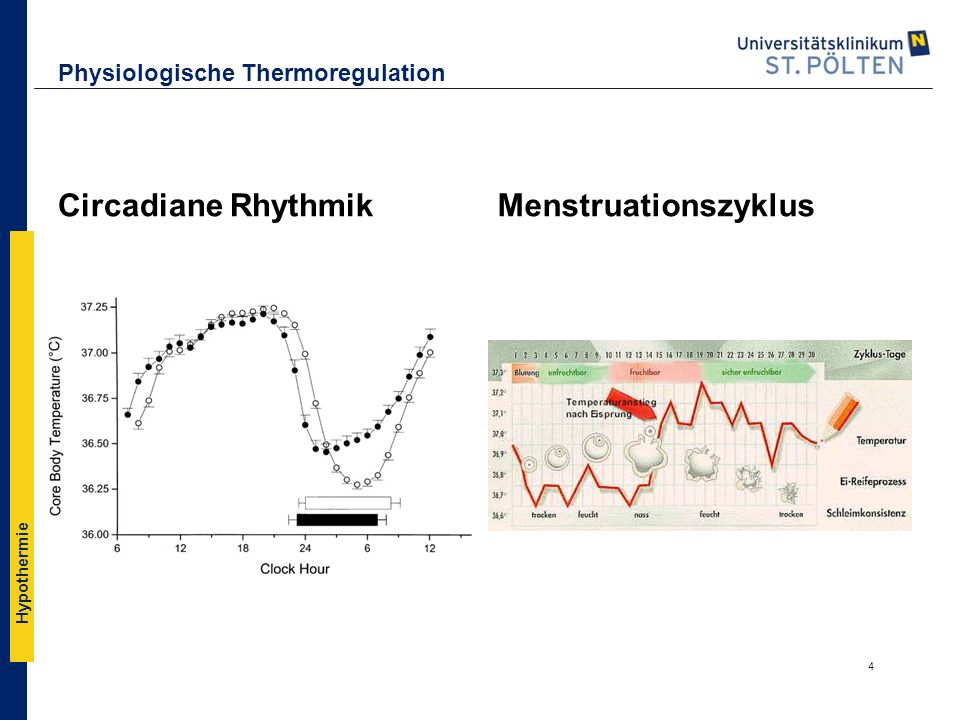 Physiologische Thermoregulation