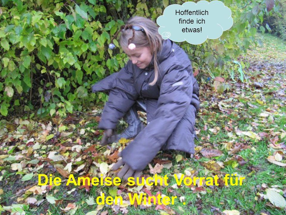 Die Ameise sucht Vorrat für den Winter .
